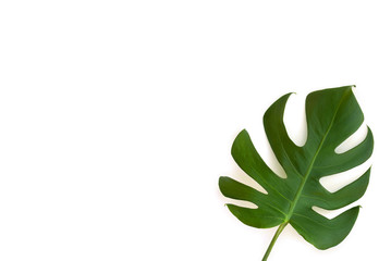 Tropical leaf monstera on a white background with space for text. Top view, flat lay.