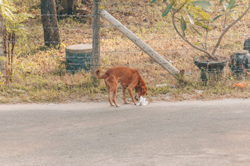 Street Dog eating plastic