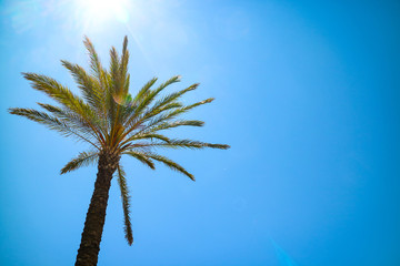 Palm tree in the blue sunny sky