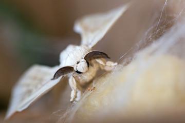 kozadan çıkan kelebek