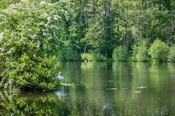 Cygne au bord de l'étang près de la Moselle