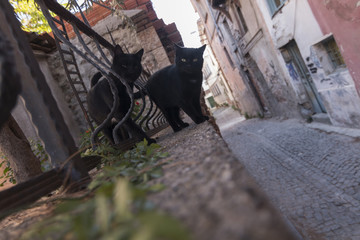 A black cat gang funny looking in Ayvalik, Turkey
