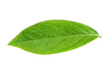 Blueberry leaf clipping path