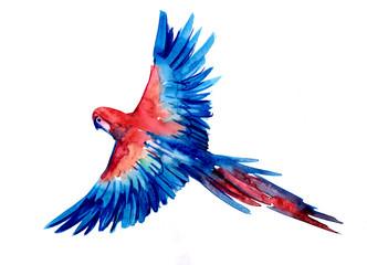 Tropical parrot Ara