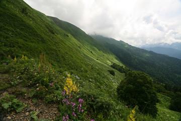 Flowering meadows in the Caucasus mountains. On the way to Bzerpinskiy karniz, Sochi.