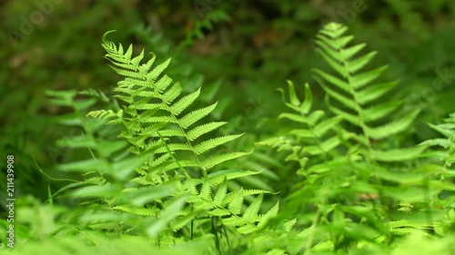 Delicate Ferns on Forest Floor, with Nature Sounds