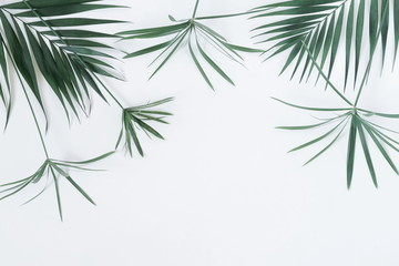 Tropical exotic green palm branches leaves  on a pale blue  background.abstract. top view.copy space