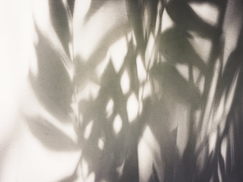Tree leaves shadow on wall Nature Abstract background