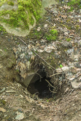Badger sett i the ground