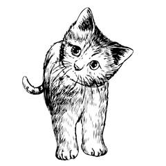 freehand sketch illustration of little cat, kitten