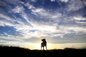 夕焼けと犬のシルエット