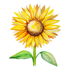 sunflower water color drawing