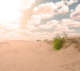 The sun shines over the desert. Summer season.