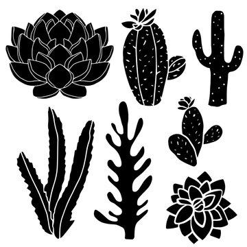 Cacti, succulents, potted plants