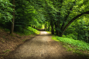 Walkway With Green Trees in Forest. Beautiful Alley In Park. Pathway Way Through Dark Forest