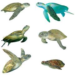 Photo sur Plexiglas Tortue Sea Turtles isolated