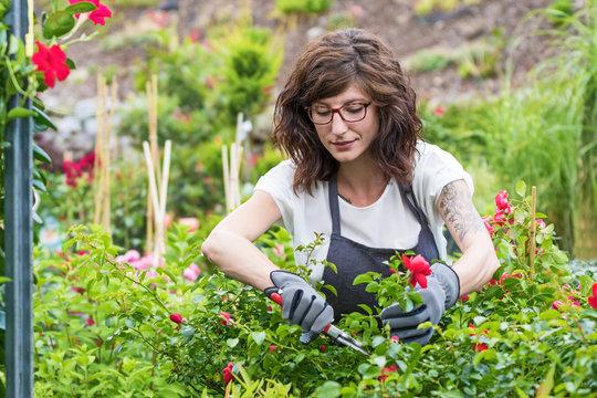 Gärtnerin am Arbeitsplatz beim schneiden der Rosen