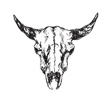 Skull of bull with horns, hand drawn ink doodle, sketch, vector outline illustration
