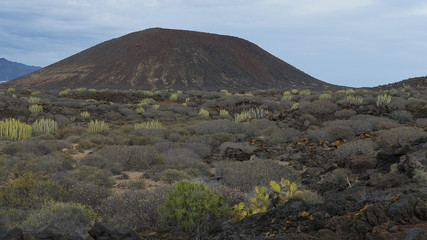 View towards the most representative volcanic cone covered in unique endemic flora in The Special Natural Reserve of Malpais de la Rasca, Palm-Mar, Tenerife, Canary Islands, Spain