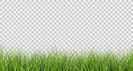 Vector bright green realistic seamless grass border isolated on transparent background Fototapete