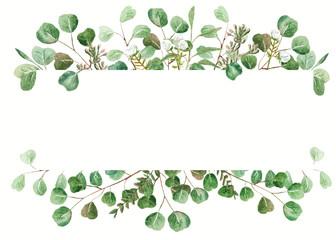 Eucalyptus frame on white
