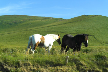 Foto op Canvas Koe Horses in Ireland