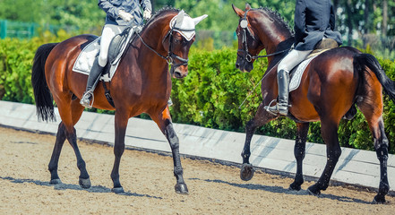 Two dressage horses and riders. Sorrel horse portrait during equestrian sport competition. Advanced dressage test. Copy space for your text.