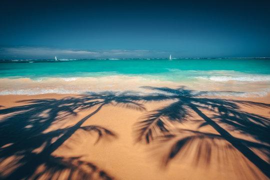 Palm trees shadow on the tropical beach Punta Cana, Dominican Republic.
