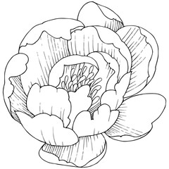 Peony flower in a vector style isolated. Full name of the plant: peony. Vector flower for background, texture, wrapper pattern, frame or border.