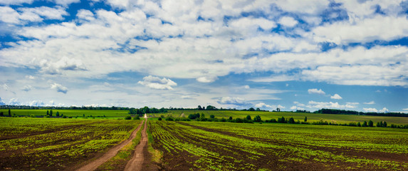 Wall Mural - Summer panoramic view with a fields and dirt road
