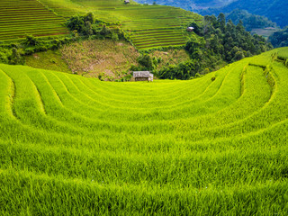 Scenic landscape of terraced rice field with farm hut, Mu Cang Chai, Yen Bai Province, northern Vietnam