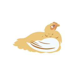 Chicken broiler. Poultry. Label for chicken products. Farming. Livestock raising. Vector illustration.