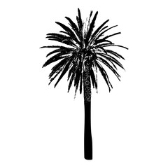 Silhouette of a palm tree. Black on white background.