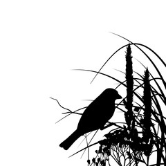 Silhouette of a sparrow sitting on a branch in the grass isolated on white background. Summer.
