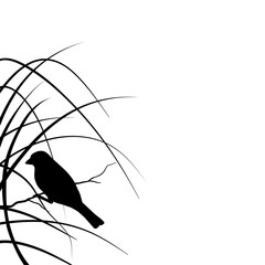 Silhouette of a sparrow sitting on a branch in the grass isolated on white background. Nature. Summer.