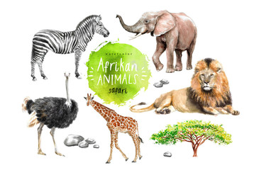 watercolor illustration of wildlife in Africa: zebra, lion, ostrich, elephant, giraffe, southern savannah wood and stones, a set of drawings from the hands of animals in the zoo