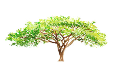 watercolor illustration of a southern tree in africa, drawing by hand part of a savannah nature