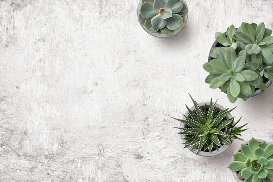 minimalist background with various succulents on a painted white wooden desk, top view, copyspace