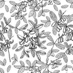 Seamless background with honeysuckle berries, leaves and branches on white. Vintage nature concept, hand drawn vector illustration with engraved design elements