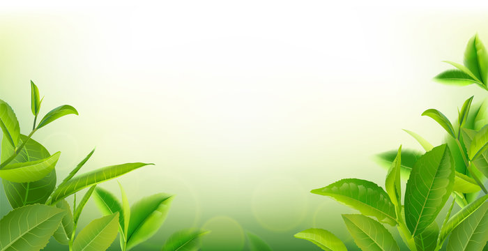 green tea leaves in motion on sky background.