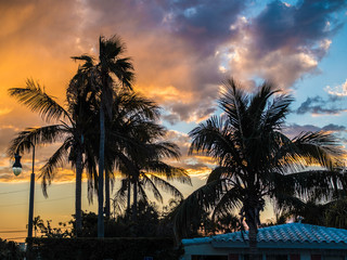 Palm trees in fornt of sunrise sky