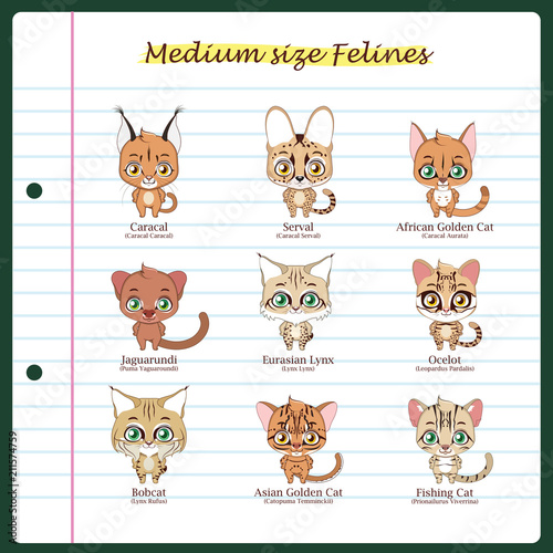 medium sized feline illustrations with regular and scientific names