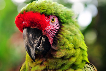 Close up of a parrot in a garden. Concept: Nature, animals, zoo