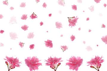 красивая нежная розовая роза на белом фоне