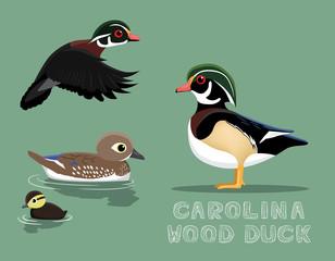 Carolina Wood Duck Cartoon Vector Illustration