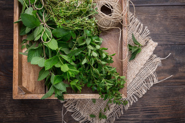 Mixed fresh summer herbs in wooden rustic box, overhead view, copy space