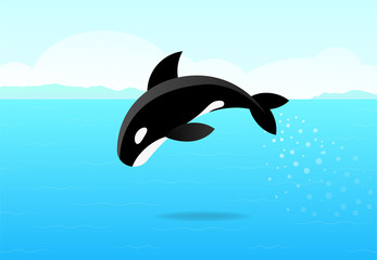 Killer whale jumping on sea, flat vector art