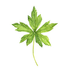 watercolor drawing green leaf