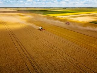 Harvesting golden grains
