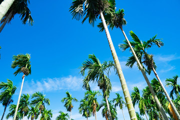 Palm trees on blue sky background . travel, summer, vacation and tropical beach .